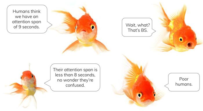 fish-convo-attention